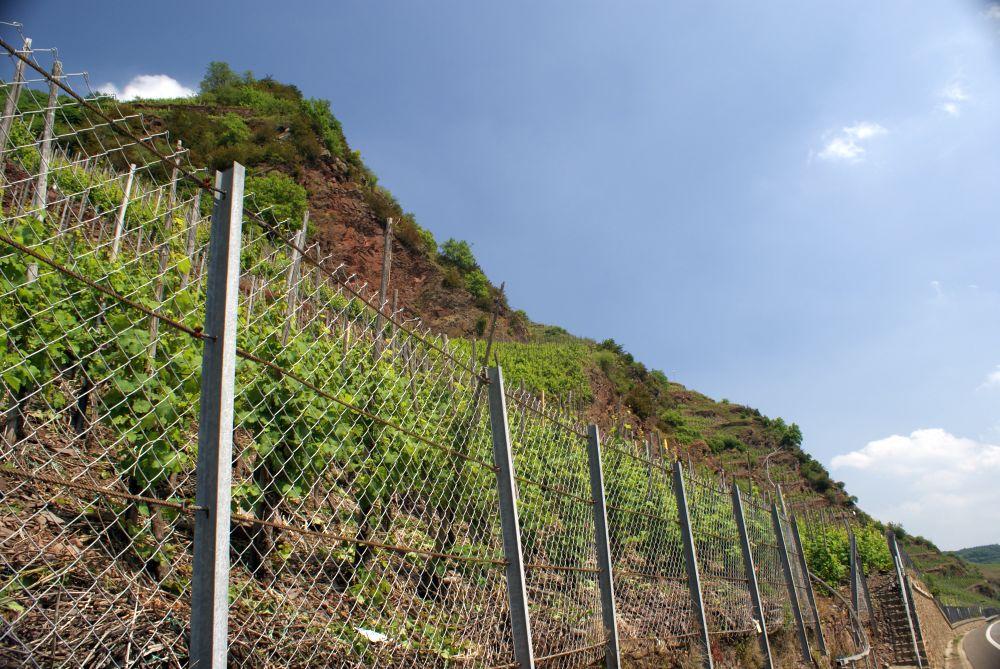 Der Bremmer Calmont im Weinanbaugebiet Mosel