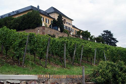 Johannisberg im Rheingau