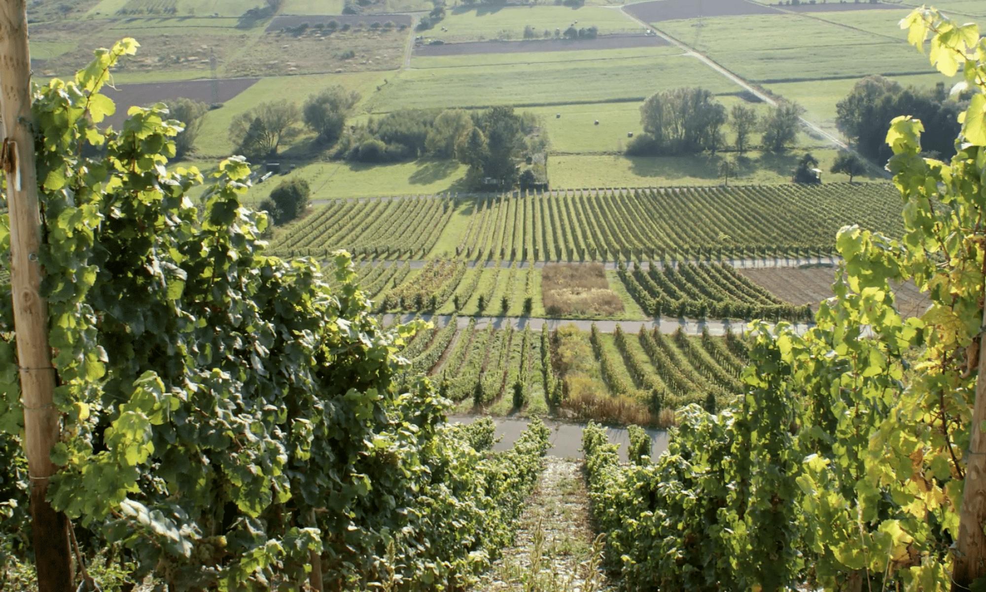 Weingeschichte-n
