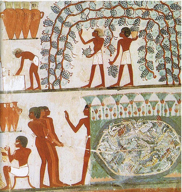 Weinlese Ägypten