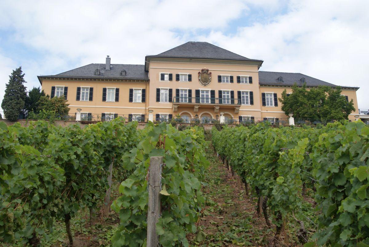 Riesling am Schloss Johannisberg Rheingau